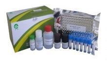 大鼠核因子κB抑制蛋白α(IKBα)ELISA试剂盒现货热卖