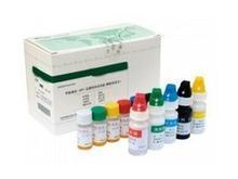小鼠维生素C(VC)ELISA试剂盒价格
