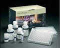 小鼠补体蛋白3(C3)ELISA试剂盒
