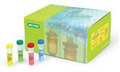 大鼠新生甲状腺素(NN-T4)ELISA试剂盒批发