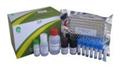 鸡巨噬细胞替代激活相关化学因子1(AmAC-1)ELISA试剂盒说明书