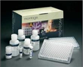 兔子胶原酶II(CollagenaseII)ELISA试剂盒批发