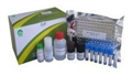 豌豆凝集素(PSA)ELISA试剂盒哪家好
