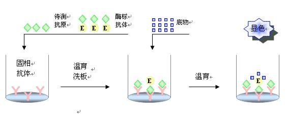 elisa实验优化方案分析总结
